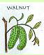ウォルナット