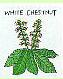 ホワイトチェストナット