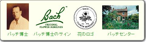 バッチ博士サイン、花のロゴ、バッチセンター